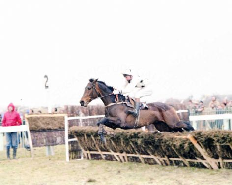 Racehorse with Jockeyin The Law